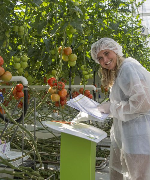 Variety Matching tomatoes research scouting Pascale Tammes-min
