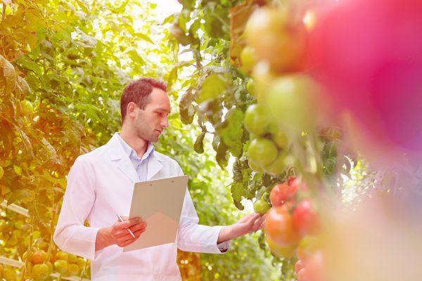Variety Matching tomatoes varieties scouting research onderzoek rassen onafhankelijk independent infomation informatie_verkleind